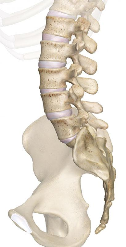 Напрямки остеопатії