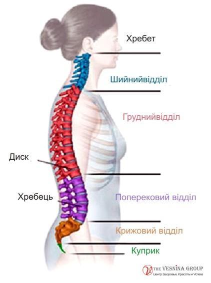 Програма семінару: Остеопатичний масаж