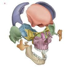 Краніосакральна остеопатія