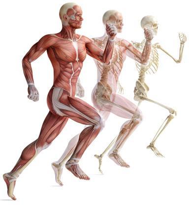 Структуральная остеопатия