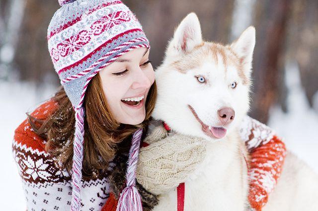 Хаски-терапия. Кому поможет общение с собаками